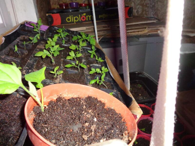 udobreniya dlya pomidorov