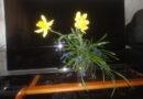 Весенние цветы на даче и название цветов многолетников