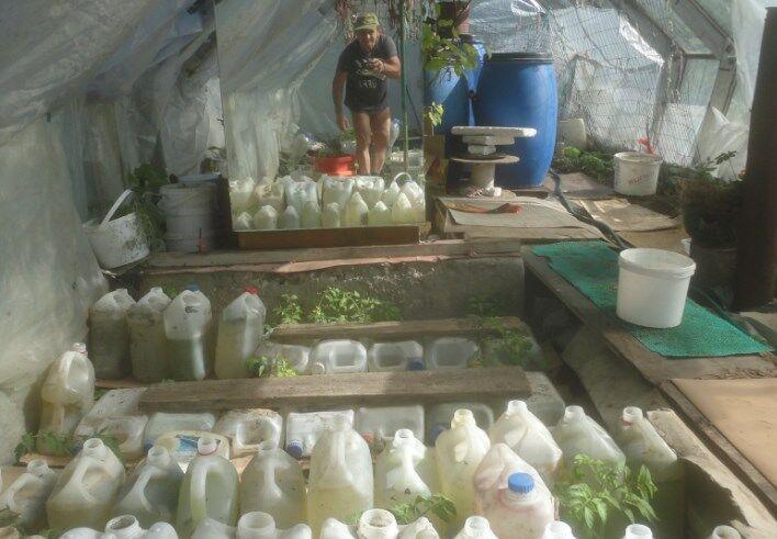 Помидоры в теплице – как сажать, выращивать и ухаживать за ними